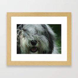 Clyde Framed Art Print
