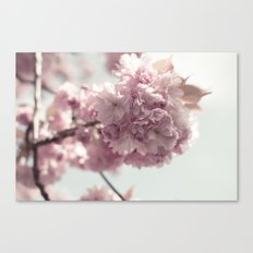 Spring's arrival: Cherry blossoms Canvas Print