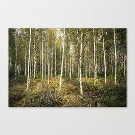 Silver Birch Forest Canvas Print
