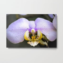 Macrophotography: Pink Orchid Metal Print