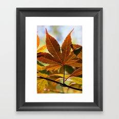 Japanese Maple Leaf Framed Art Print