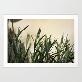 I hate lavender Art Print