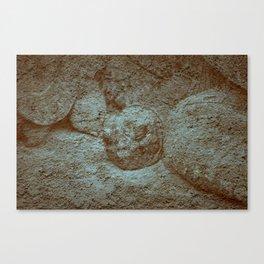 Giant Tortoise Canvas Print