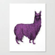 suri alpaca Canvas Print
