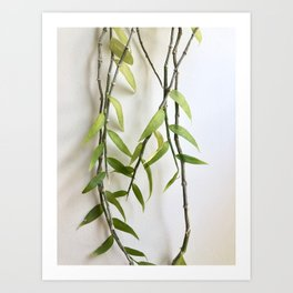 Orchid Vines Art Print
