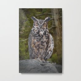 Portrait of a Great Horned Owl Metal Print