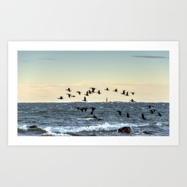 Flying flock of cormorants Art Print
