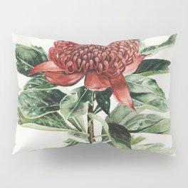 Waratah Flower Pillow Sham