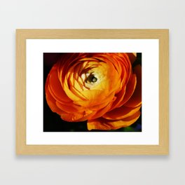 Introspective buttercup beauty Framed Art Print