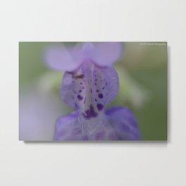 Lavender Catnip Metal Print