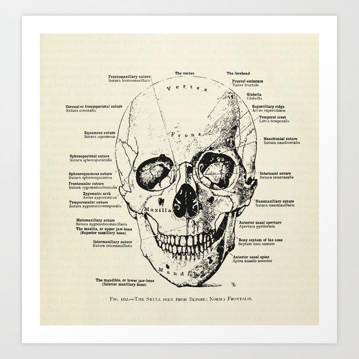 Vintage Anatomy Skull Art Print By Oonaleevintageillustrations