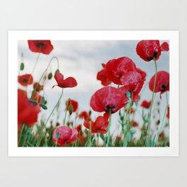 Field of Poppies Against Grey Sky Art Print