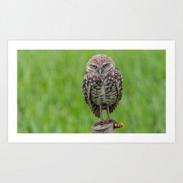Beastly Burrowing Owl Art Print