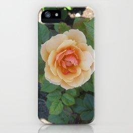 Gentle Orange Rose in the Summer Sun Shadow iPhone Case