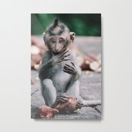 Baby monkey in The Monkey Forest Bali   Travel Photography  Metal Print