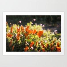 California poppy | Noriko Aizawa Buckles Art Print