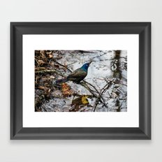 Un-Freebird Framed Art Print