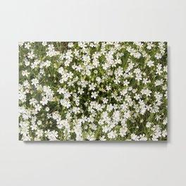 Stitchwort Stellaria Wild Flowers Metal Print