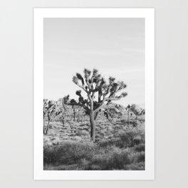 Large Joshua Tree in Black and White Art Print