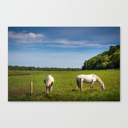 Horses grazing in Ireland Canvas Print