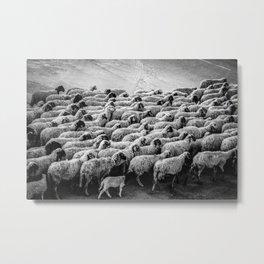 The Woolen Slaves March Metal Print