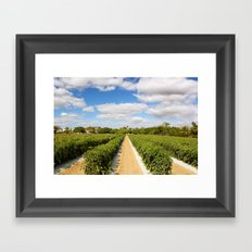 Tomato Fields  Framed Art Print