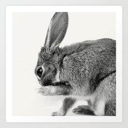 Rabbit Animal Photography Art Print