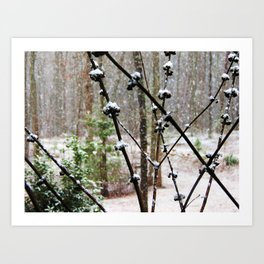 Snow Berry Art Print