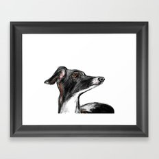 Italian Greyhound Framed Art Print