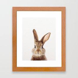 Baby Rabbit, Brown Bunny, Baby Animals Art Print By Synplus Framed Art Print