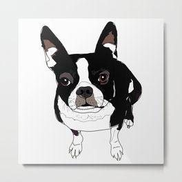 Boston Terrier Cutie Metal Print