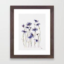 Blue Cornflowers, Illustration Framed Art Print