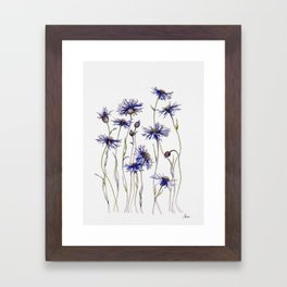 Blue Cornflowers, Illustration Framed Art Print