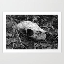 Black & White Deer Skull Art Print