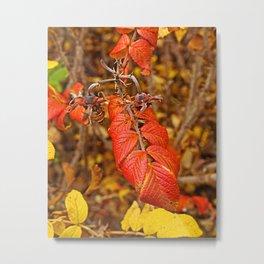 autumnal leaves Metal Print