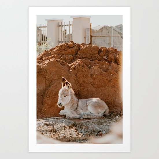 Baby Donkey by romanalilic