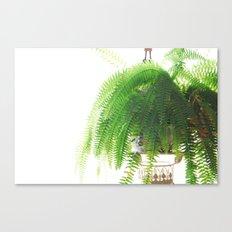 Fern-Green Canvas Print