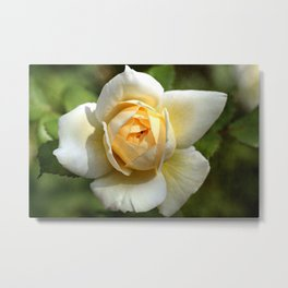 Simply the rose... Metal Print