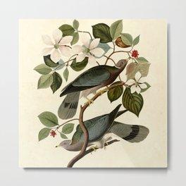 Band-tailed Pigeon (Patagioenas fasciata) Metal Print