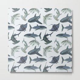 Sharks. Sea background Metal Print