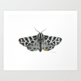Kintsugi - A Graphite Drawing of a Moth by Brooke Figer Art Print