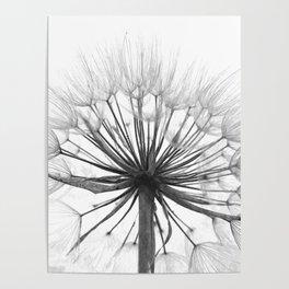 Black and White Dandelion Poster