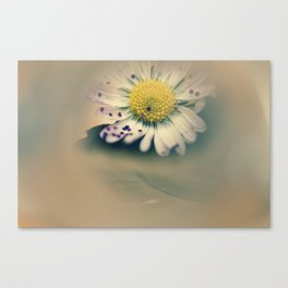 Daisy with glitter Canvas Print