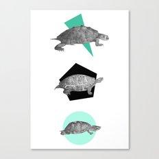 Three Old Turtles Canvas Print