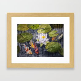 Koi Fishes and Water Lily in Lake Framed Art Print