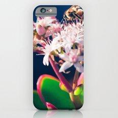 Crassula ovata Jade Flowers and Honey Bee Kula Maui Hawaii Slim Case iPhone 6s
