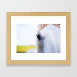 Horse Close Up Framed Art Print