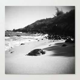 Hawaiian Sea Turtle on the Sand in Black and White Canvas Print