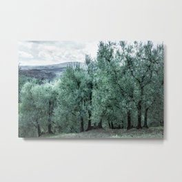 old olive trees in Tuscany, Italy. Metal Print