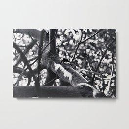 Mangrove Crab Metal Print